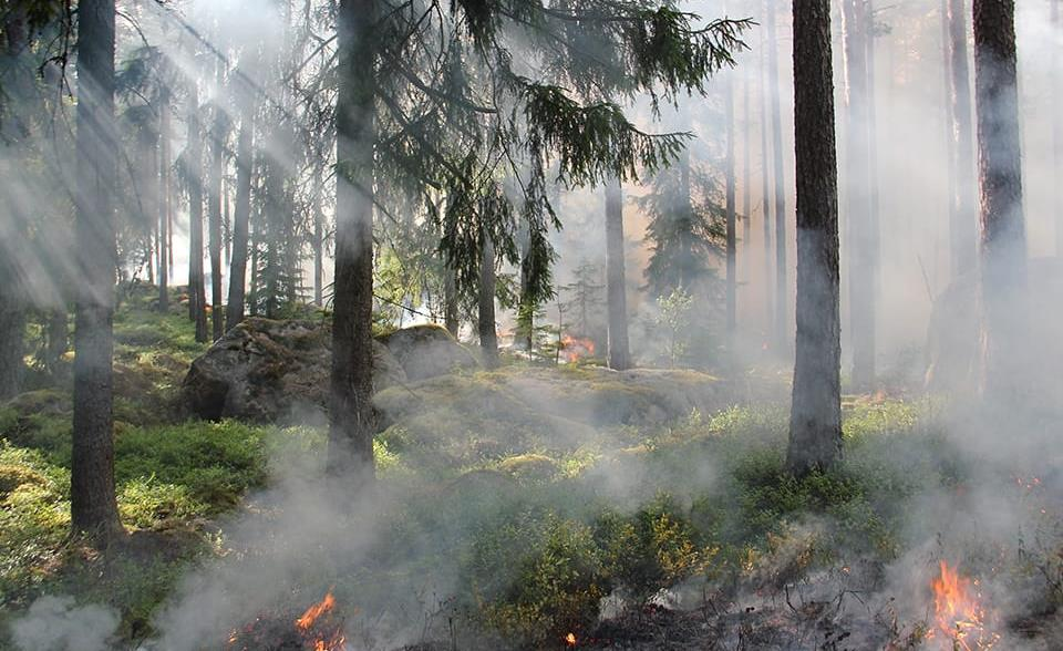 Wildfire alert and monitoring systems